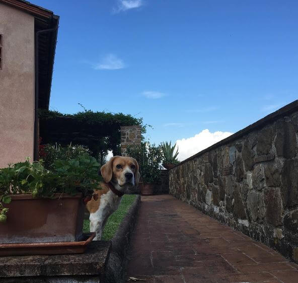 Oliver YOGA IN ITALY